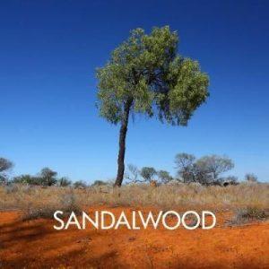 Sandalwood Australian 12ml