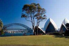 The Bennelong Twins. Gum Trees the silent keepers of Sydney Opera House